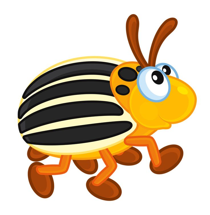 736x755 Class Insecta Clipart