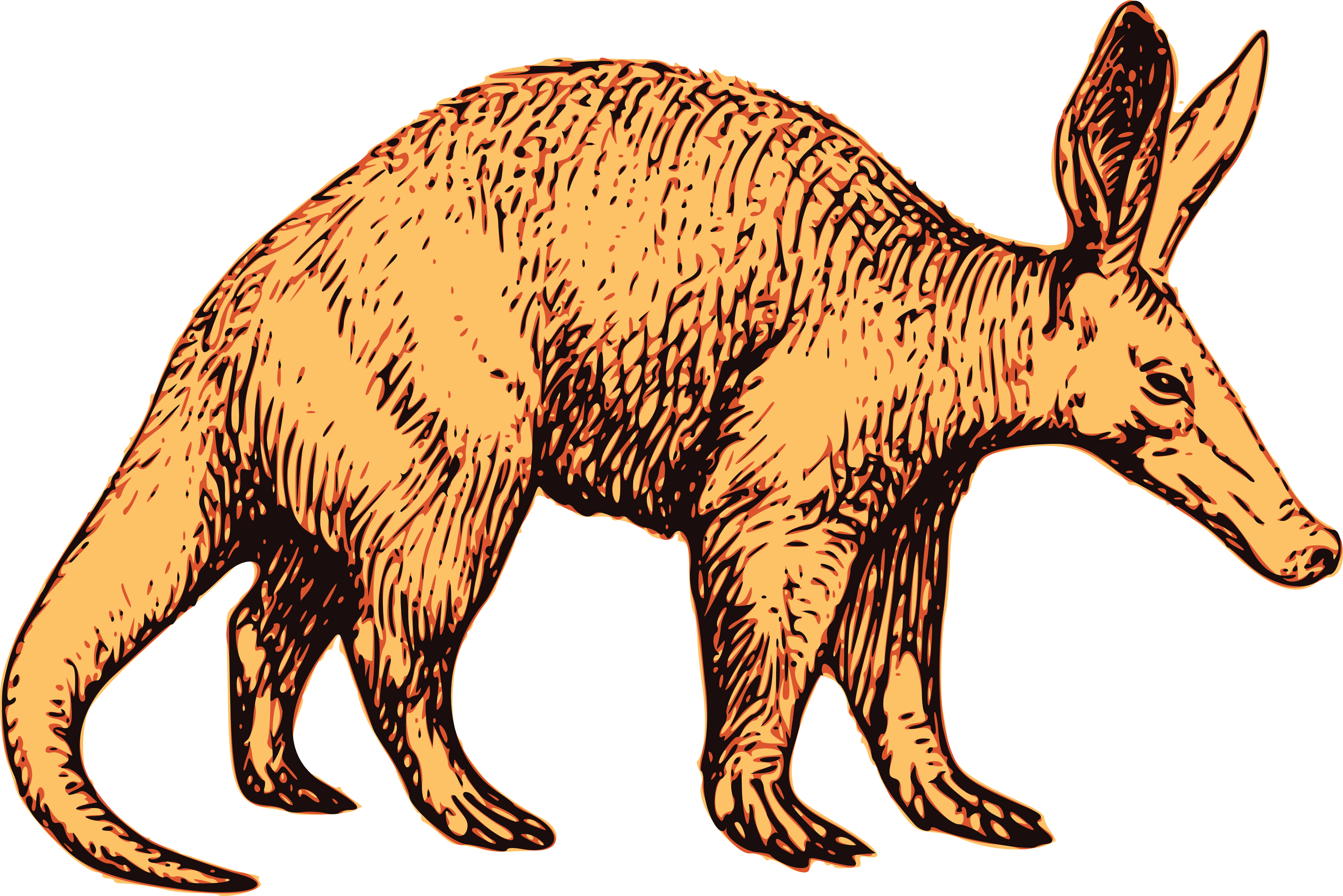 4000x2669 Free Clipart Of A Profiled Aardvark Wildlife
