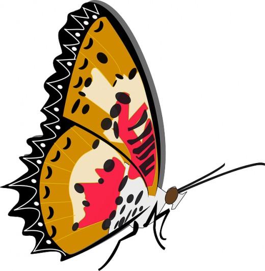 520x532 Butterfly Clip Art 170 Best Free Clip Art Amp Drawings