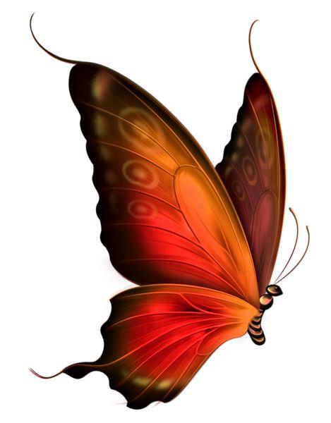 469x600 266 Best Mariposas Images On Butterflies, Beautiful