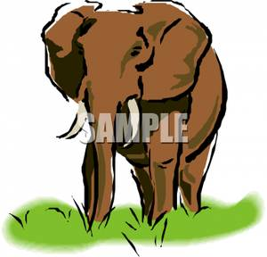 300x288 An Elephant Walking In Grass