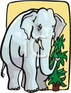 230x300 An Elephant Eating Leaves