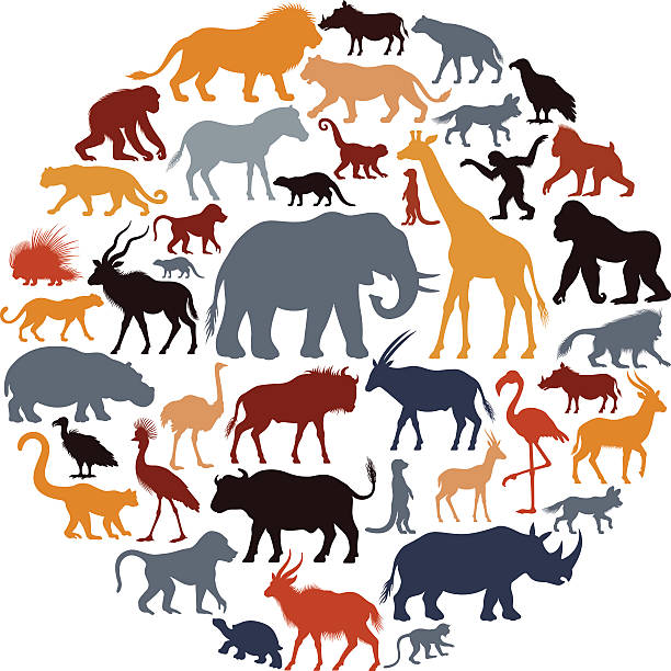 612x612 Collection Of African Animals Clipart High Quality, Free
