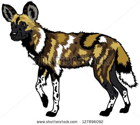 450x402 12 Best Zoo 3 African Painted Dog Images On African