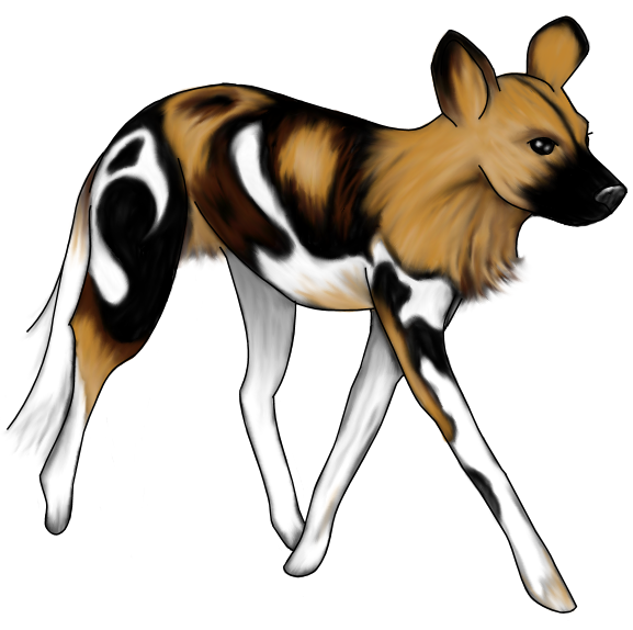 577x574 Wild Dog Clipart Savanna