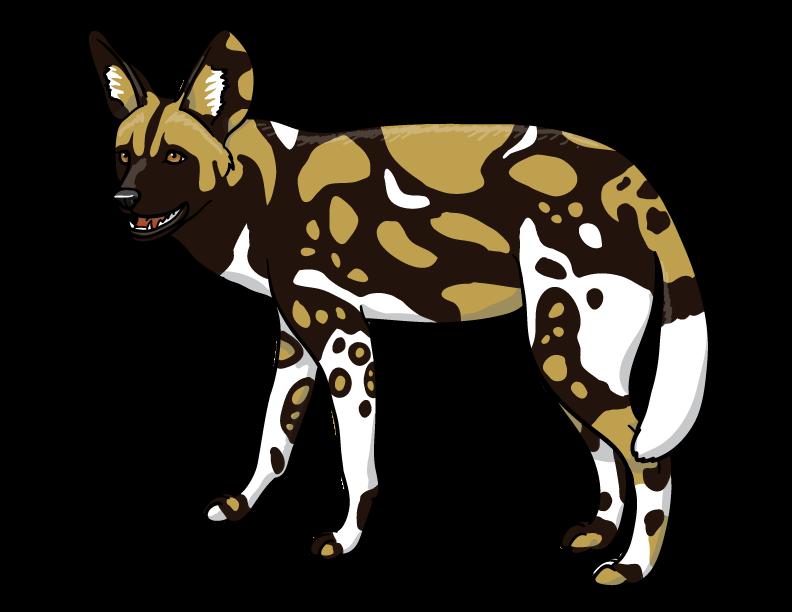 792x612 African Wild Dog By Silvercrossfox