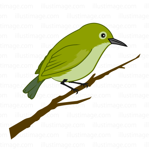480x480 Free Bush Warbler Cartoon Amp Clipart Amp Graphics [Ii]