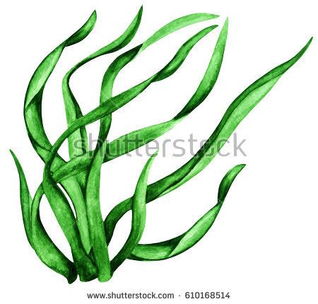450x430 Pond Weeds Clip Art