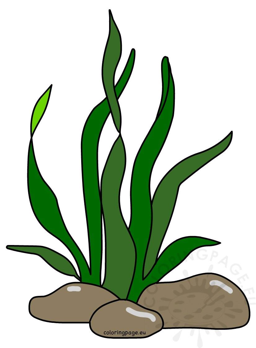 826x1122 Seaweed Clip Art