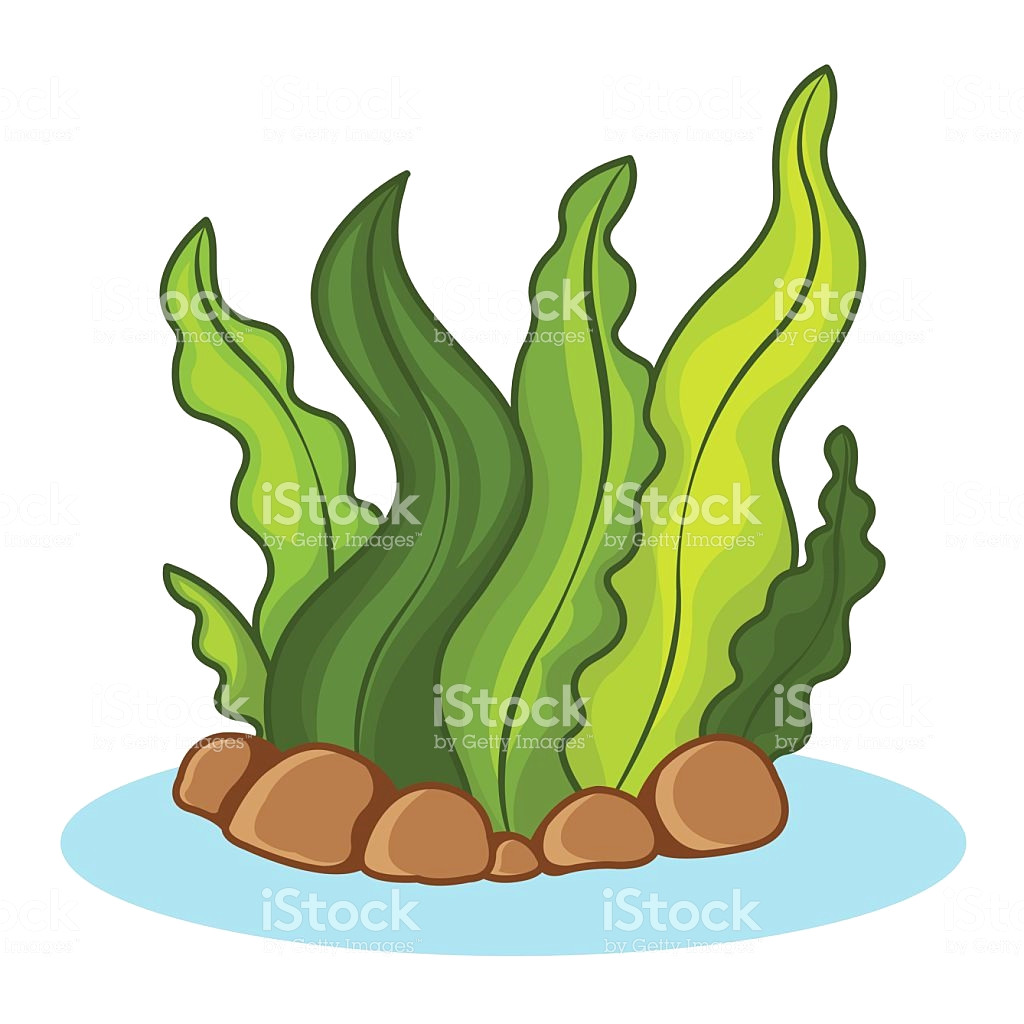 1024x1024 Seaweed Vector Id465121314 Clip Art