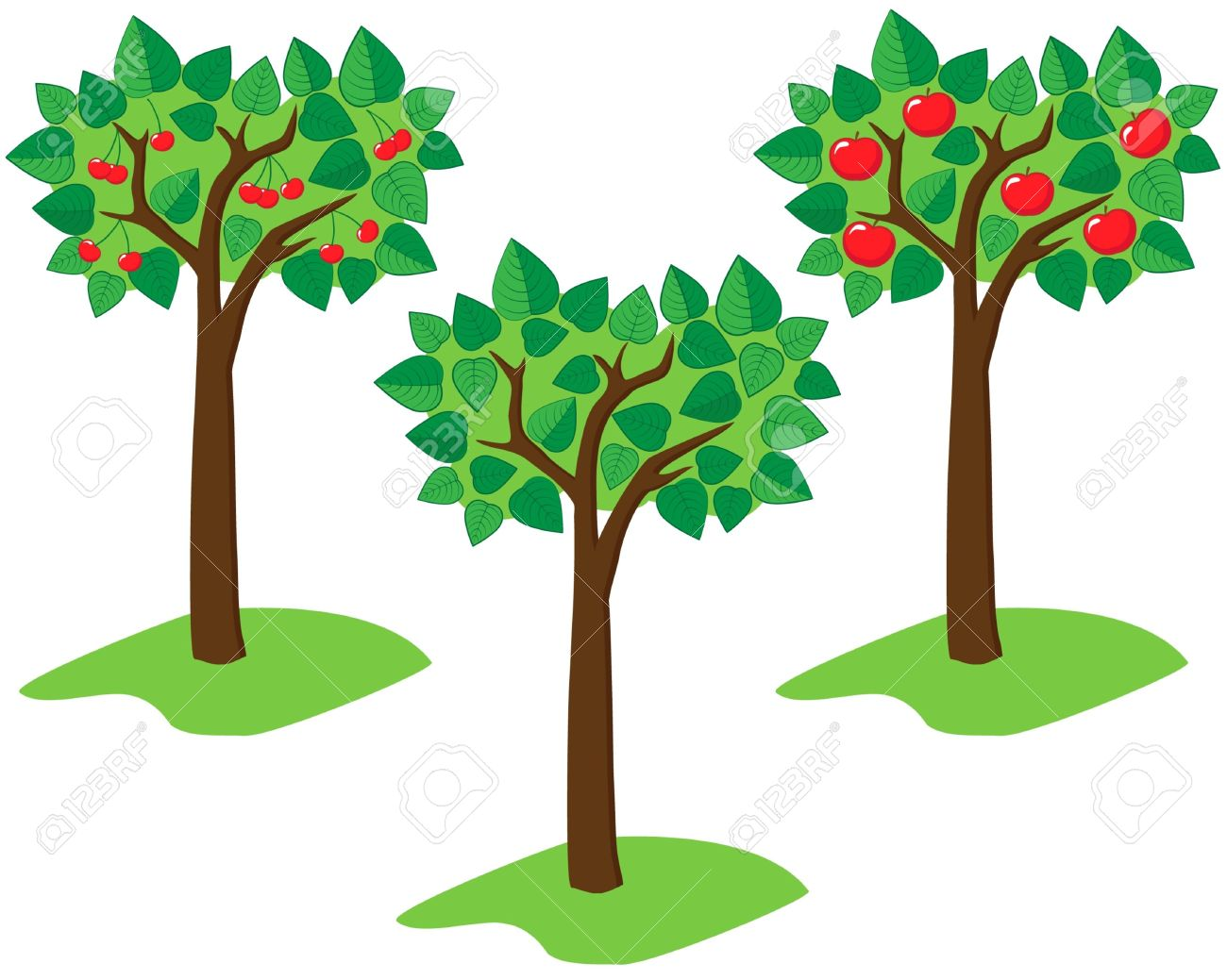 1300x1039 Cherry Tree Clipart Fruit Drawing