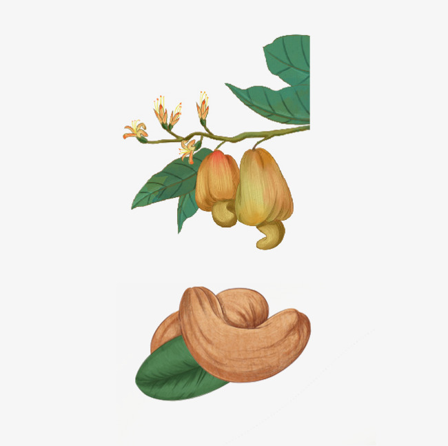 650x647 Dried Fruit Png Images Vectors And Psd Files Free Download
