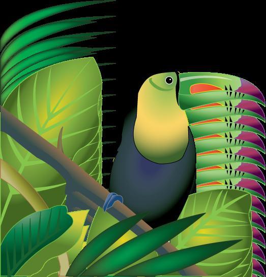 523x546 Jungle Plants Clip Art Rainforest Plants Clip Art Pictures
