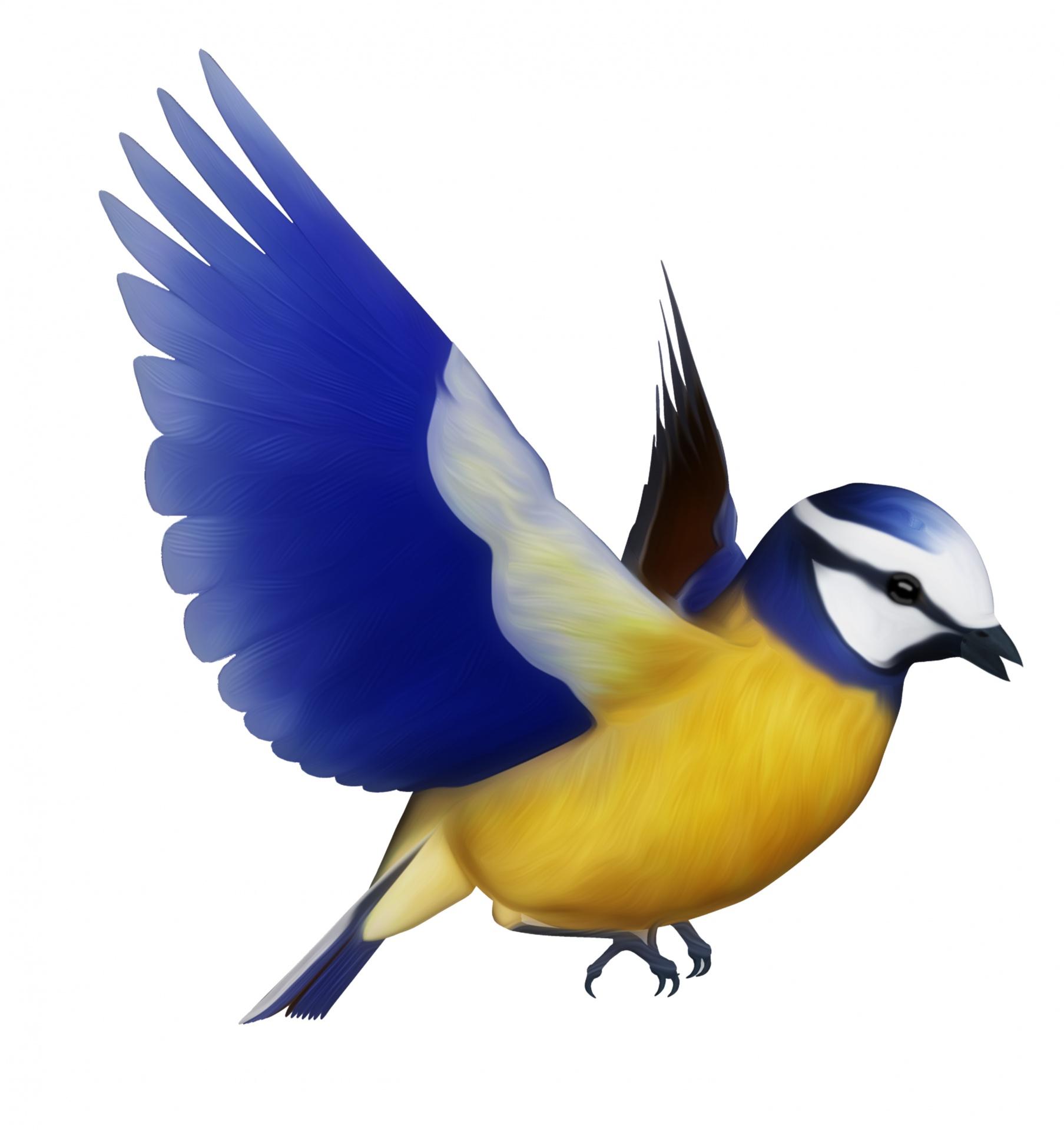1807x1920 Birds Flying Clipart