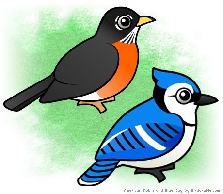 460x400 Com Launched American Robin, Jay And Robins