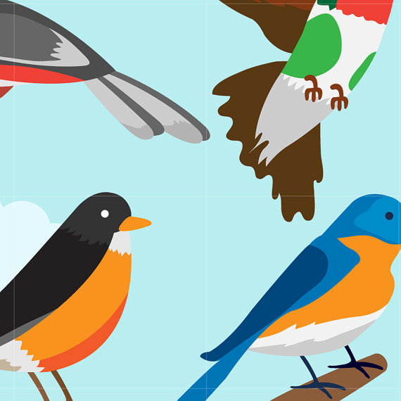 570x570 Bird Digital Vector Clip Art Cartoon Birds For Kids Learning