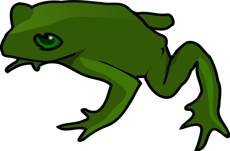 800x526 Free Simple Green Frog Clip Art Public Domain Images Nature