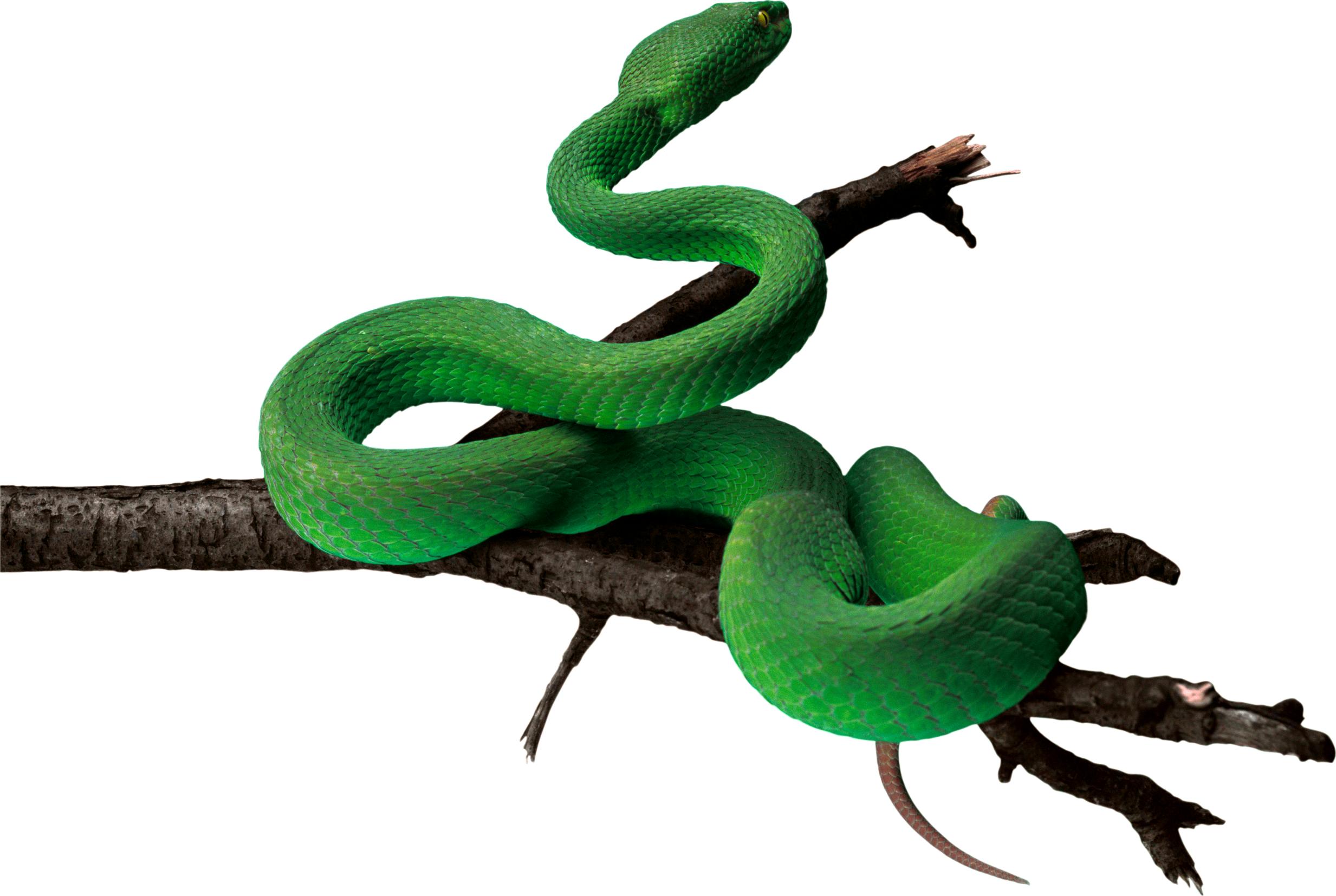 2466x1654 Anaconda Png Pic Png Mart