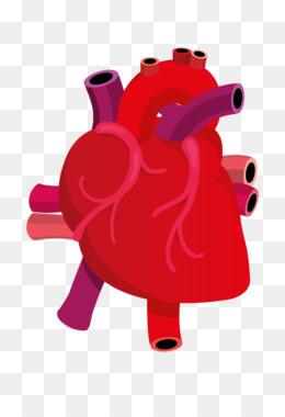 260x380 Heart Drawing Anatomy Clip Art