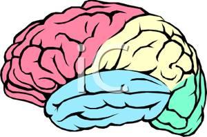 300x198 Clip Art Image The Human Brain