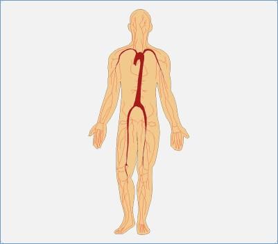 401x351 Humans Body