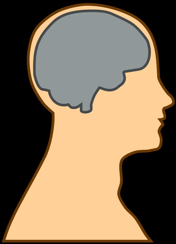 577x800 Brains Clipart Anatomy