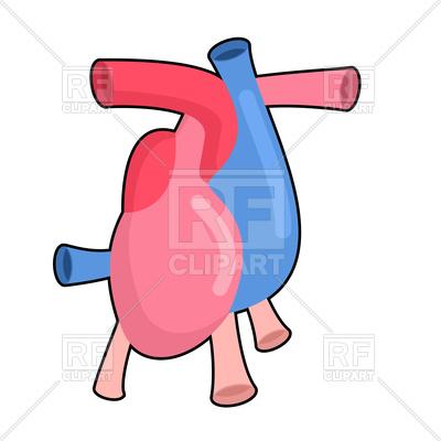 400x400 Heart Anatomy Body Royalty Free Vector Clip Art Image