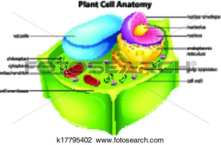 450x297 Top 92 Plant Cell Clip Art