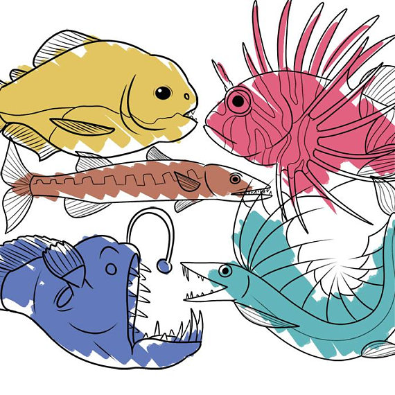 570x570 Line Art Predatory Fish Clip Art Set, Animal Illustration Clipart