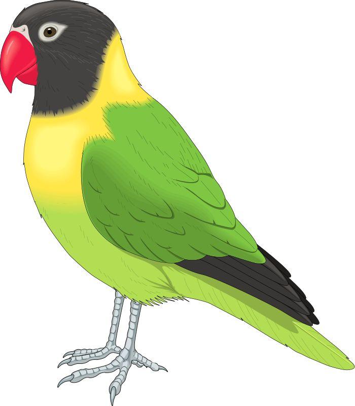 700x800 Finch Clipart Love Bird