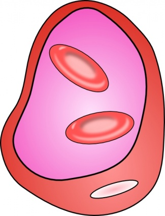 325x425 Free Download Of Erythrocyte Red Blood Cell Clip Art Vector