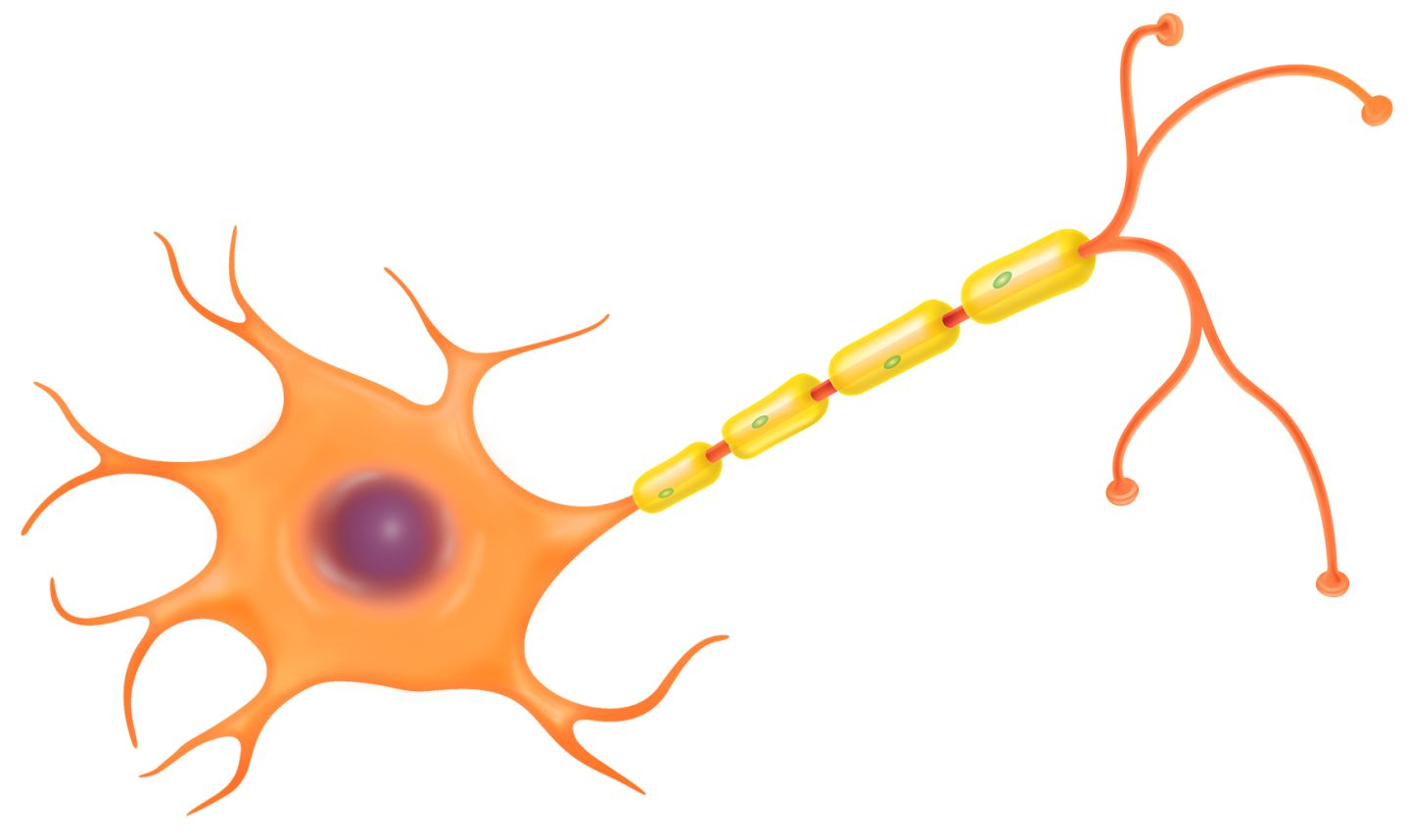 1440x858 Nerve Cell Clipart