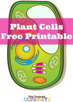 236x330 Top 92 Plant Cell Clip Art