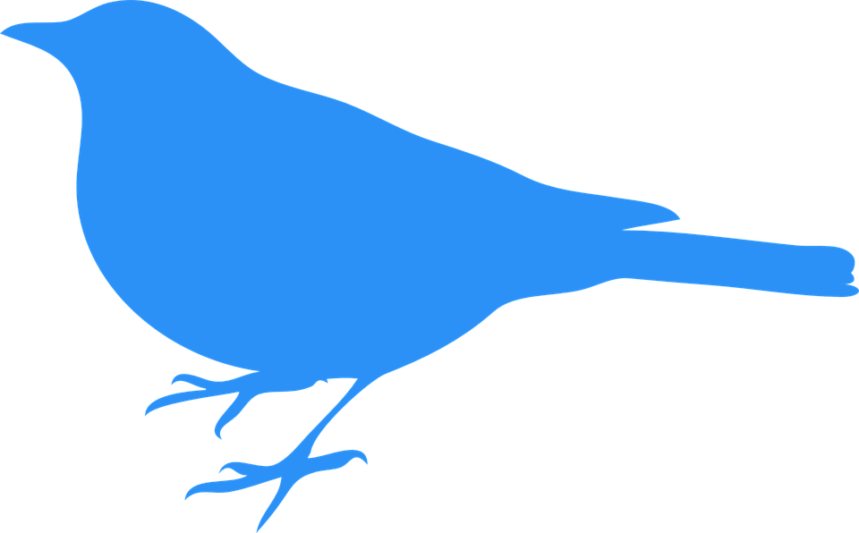 960x596 Bluebird Clipart Blue Animal