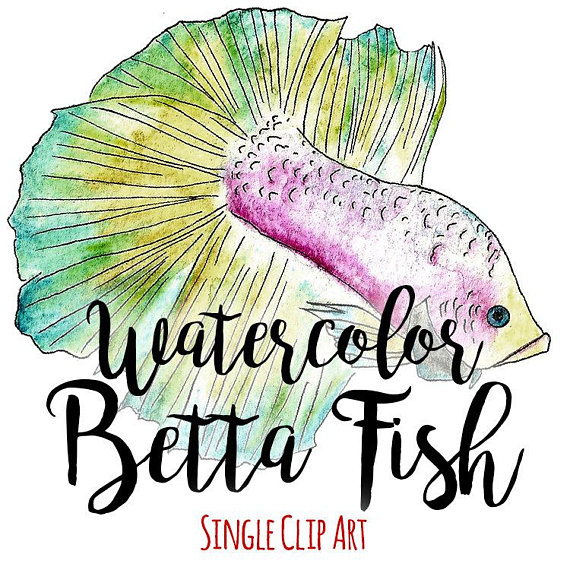 570x570 Watercolor Betta Fish Clip Art Commercial Use, Siamese Fighting