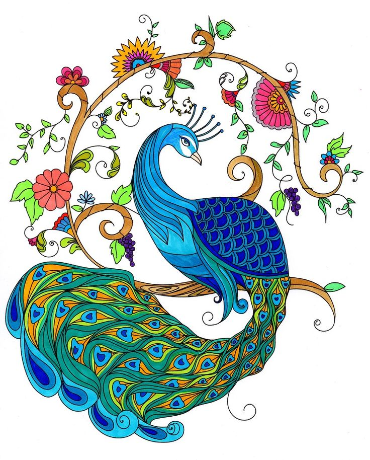 736x914 129 Best Let's Colour In Images On Adult Coloring