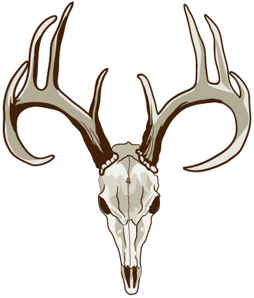 362x425 Deer Skull Clipart Group
