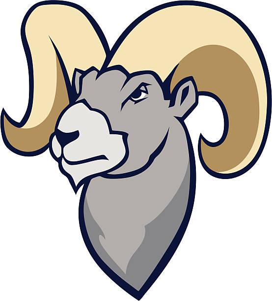 554x612 Ssckull Clipart Bighorn Sheep'44973