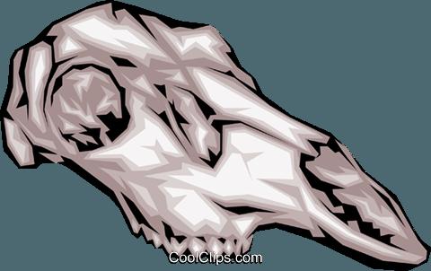 480x302 Animal Skull Royalty Free Vector Clip Art Illustration Anim0062