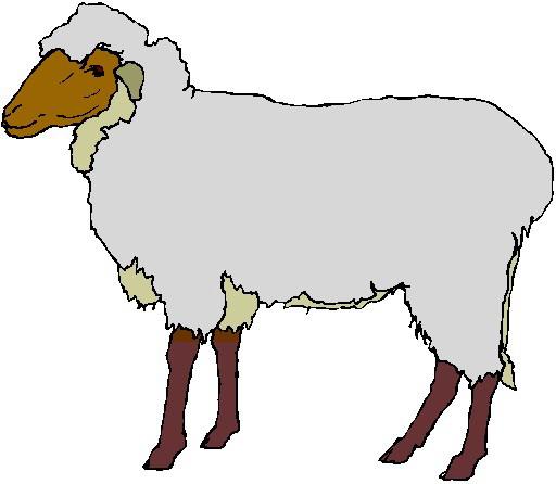 512x446 Clipart Sheep