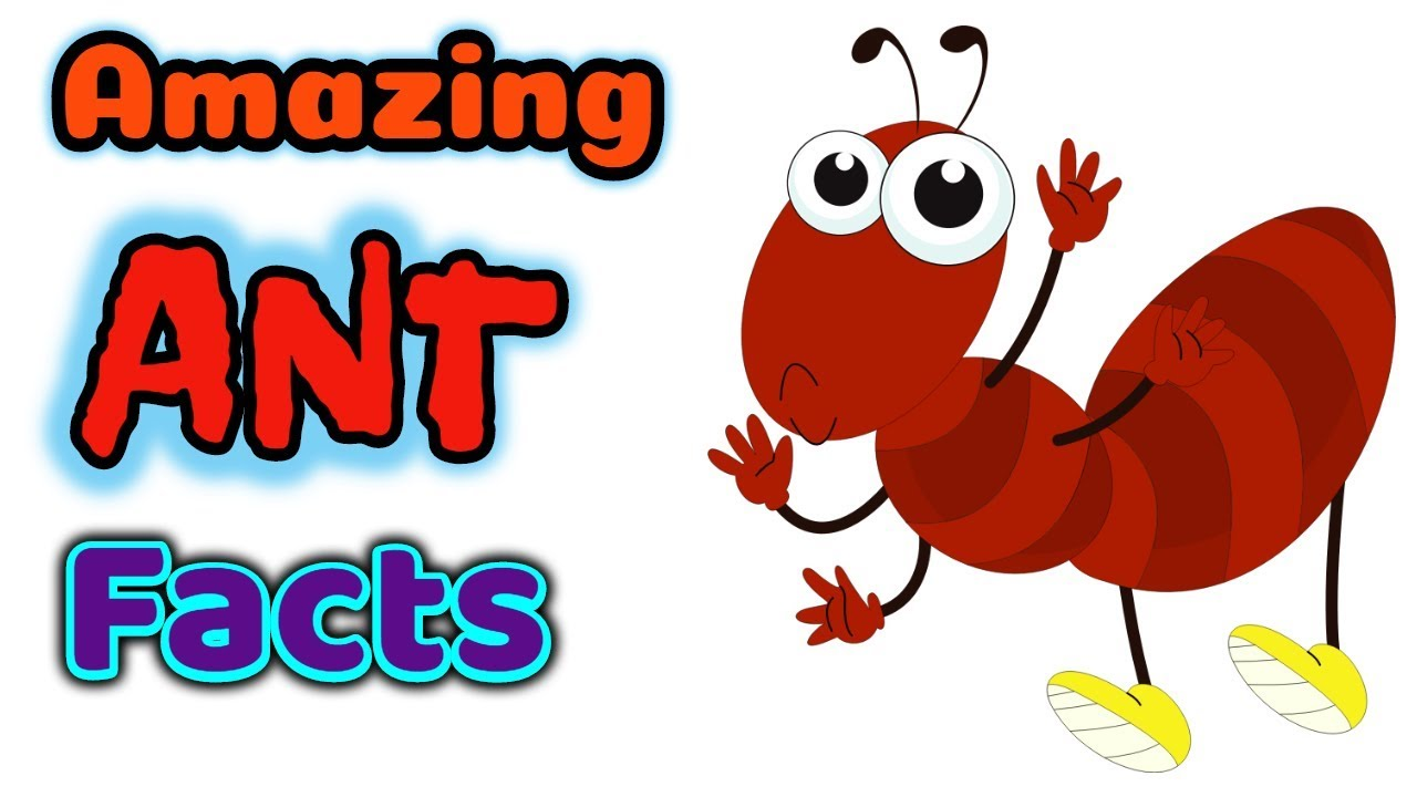 1280x720 Enormous Ant Images For Kids 19834 1979 905 Rotorsport2 Com