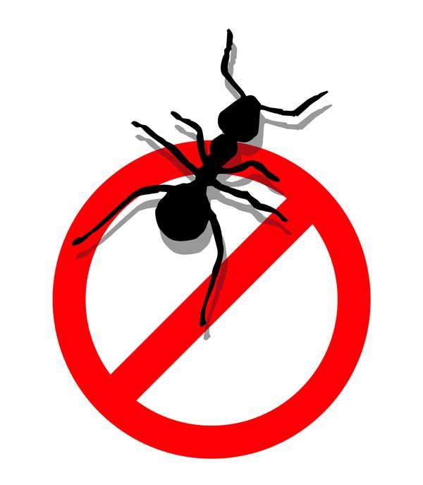 600x687 No Ants Clipart