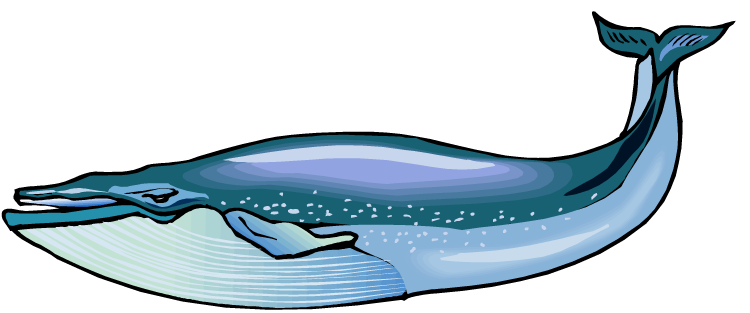 750x313 Humpback Whale Clipart Free Collection Download And Share