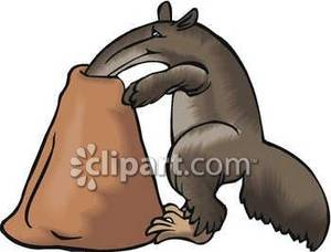 300x228 Anteater With His Snout In An Ant Hole