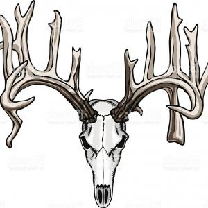 300x300 Antler Clipart Free Download Clip Art On Cool Deer Horns Geekchicpro