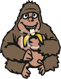 233x300 Clip Art Image An Ape Eating A Banana