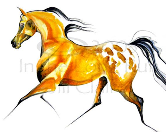 570x456 960 Best Drawing Horses Images On Horses, Equine Art