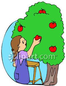 231x300 Girl Picking Apples