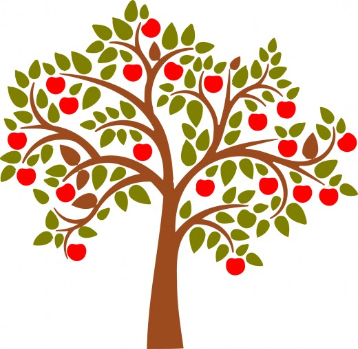 520x508 Tree Apple Orchard Clipart
