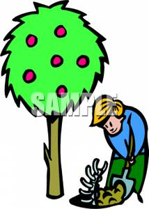 214x300 A Boy Digging Up A Fossil Near An Apple Tree Clipart Image